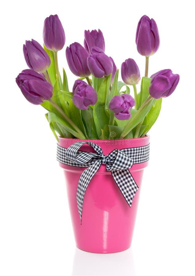 Um grupo de tulips roxos fotografia de stock