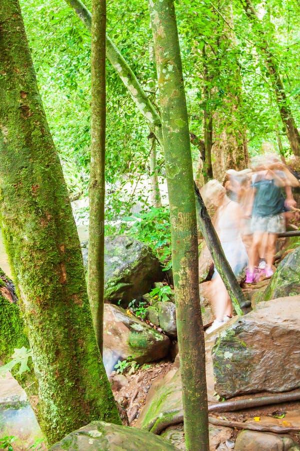 Um grupo de turistas que caminham ao longo de um c?rrego na folha lux?ria, no musgo e no l?quene da floresta tropical nos troncos imagens de stock