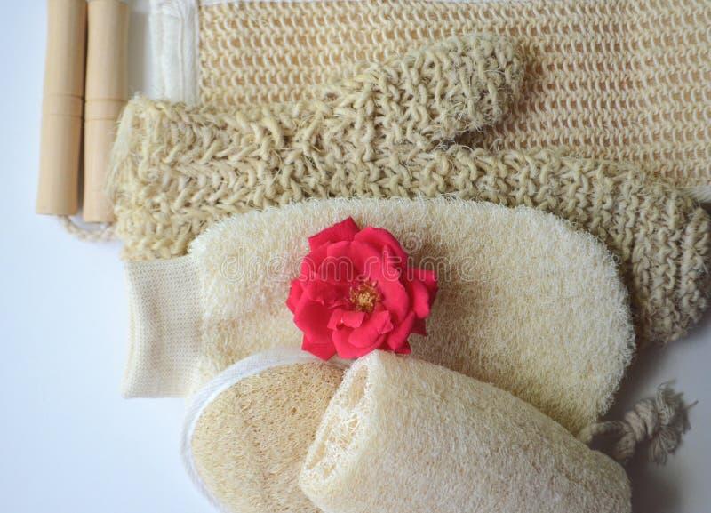 Um grupo de várias escovas cosméticas da massagem do corpo da beleza para a escovadela seca fotografia de stock royalty free