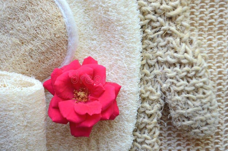 Um grupo de várias escovas cosméticas da massagem do corpo da beleza para a escovadela seca fotos de stock