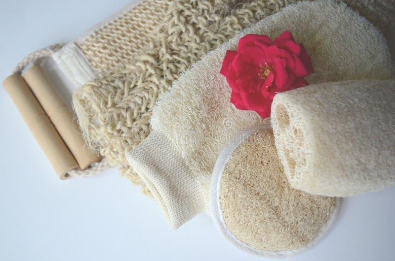 Um grupo de várias escovas cosméticas da massagem do corpo da beleza para a escovadela seca imagens de stock royalty free
