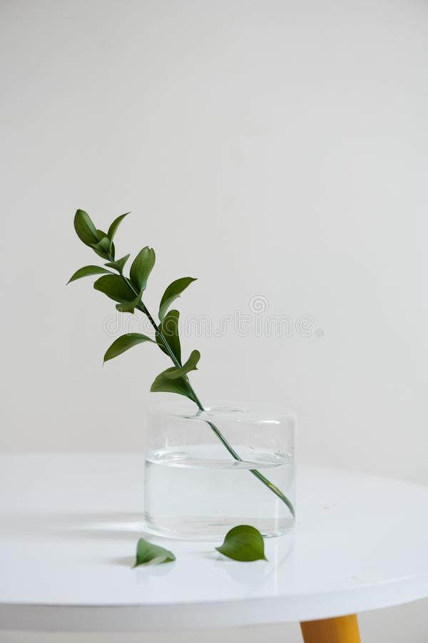Um grupo dos galhos em um frasco de vidro na tabela de madeira imagem de stock royalty free