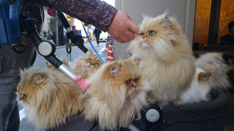 Um grupo dos gatos em um berço fotos de stock royalty free