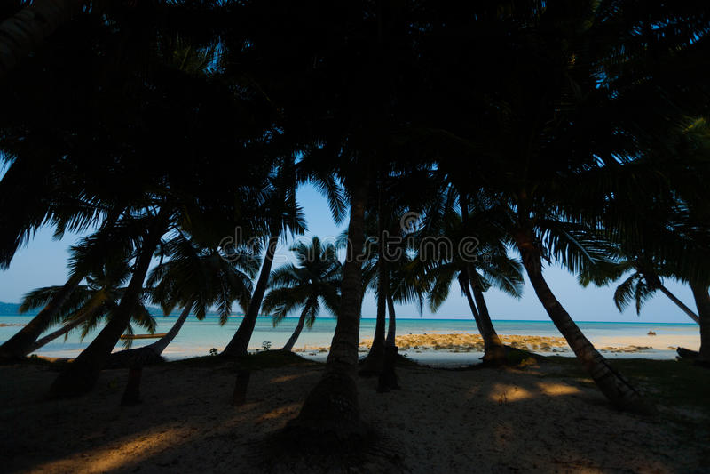 Palmeiras da silhueta que inclinam a praia ausente Havelock fotografia de stock royalty free