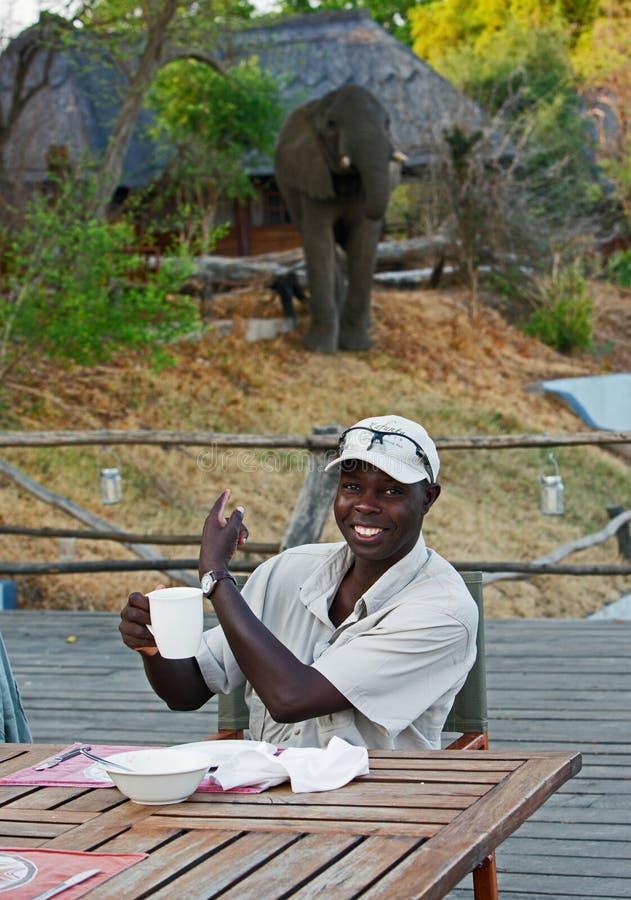 Um guia africano que indica um elefante que visitasse o acampamento no parque nacional sul de Luangwa imagem de stock