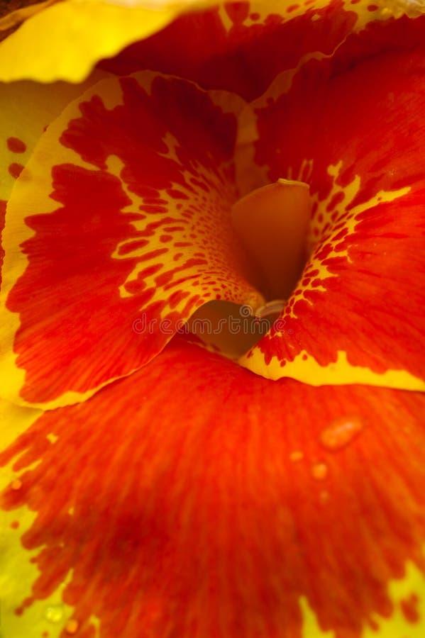 Um hibiscus em Catarata Rio Fortuna Butterfly Garden em Costa Rica imagem de stock