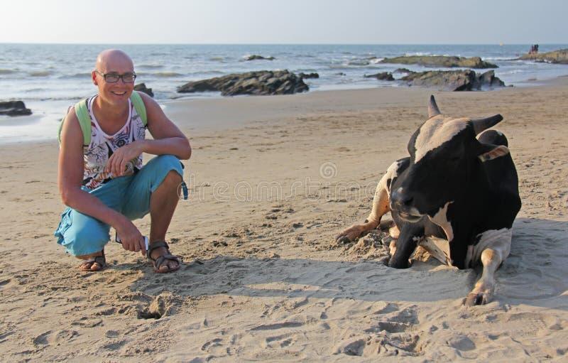 Um homem calvo na praia ao lado de uma vaca indiana sagrado Índia, Goa foto de stock