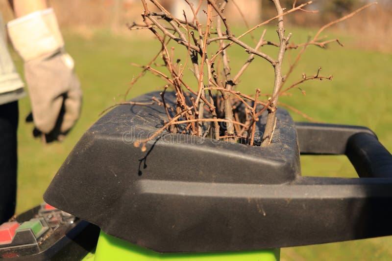 Um homem com luvas põe ramos de árvore na raspadora de madeira verde A máquina do disjuntor está cortando, está esmagando e está  fotografia de stock royalty free