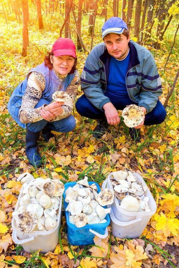 Um homem considerável e uma mulher com uma colheita rica dos pantanais brancos mim na floresta fotos de stock