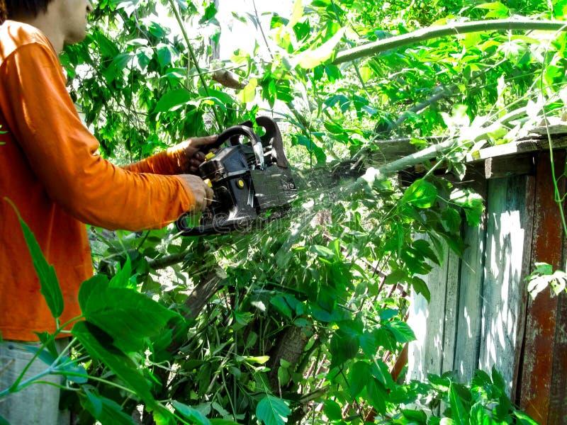 Um homem na roupa alaranjada reduziu os ramos com serra de cadeia em um dia ensolarado do verão foto de stock