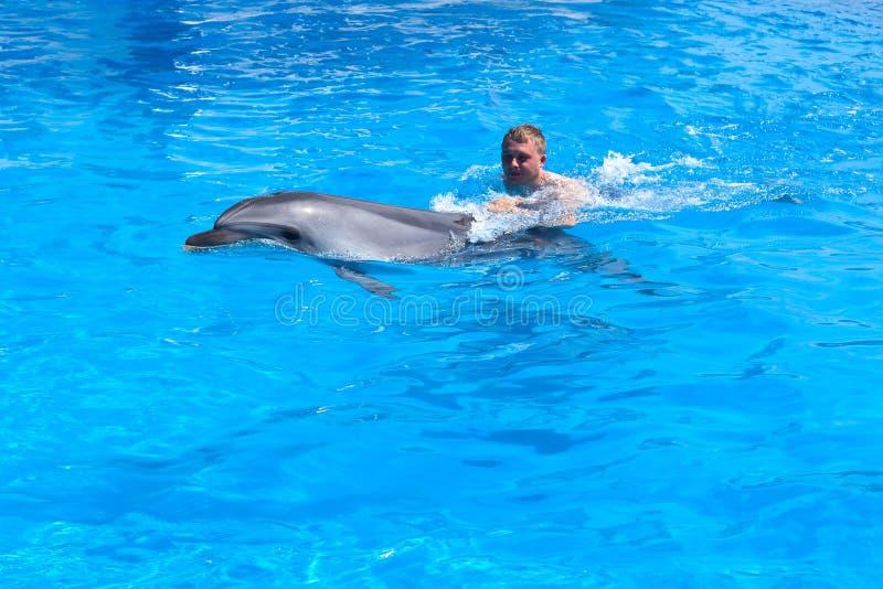 Um homem novo est? montando o golfinho, nata??o do menino com o golfinho na ?gua azul na associa??o de ?gua, mar, oceano, golfinh foto de stock
