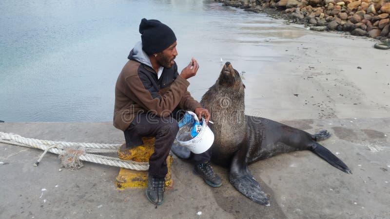 Um homem que alimenta a seu selo do animal de estimação peixes frescos fotografia de stock royalty free