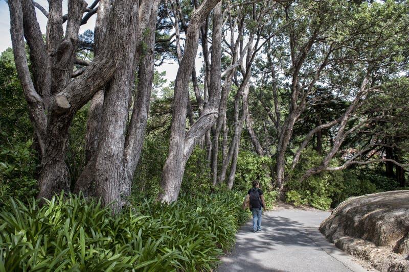 Um homem que explora em Wellington Botanic Garden, o parque público o maior na cidade, Nova Zelândia imagem de stock