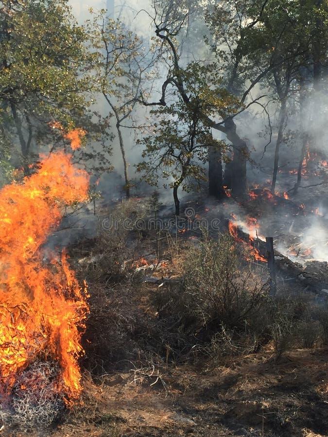 Um incêndio florestal em Califórnia do norte imagem de stock