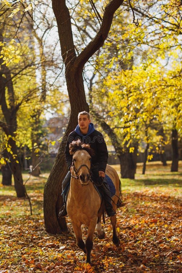 Um indivíduo emocional, passeios um cavalo bonito com um olhar amedrontado No parque do outono fotografia de stock