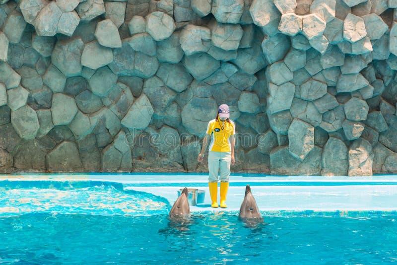Um instrutor não identificado da mulher está mostrando golfinhos fotos de stock royalty free