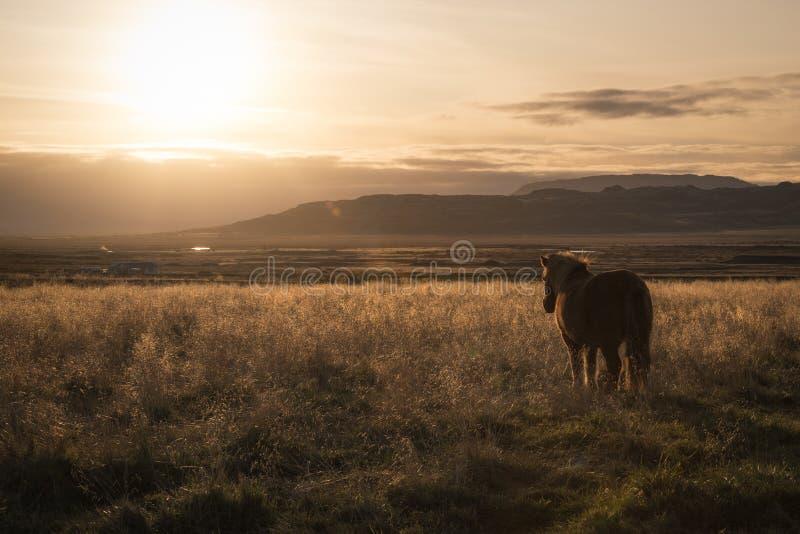 Um islandês que olha o por do sol fotografia de stock