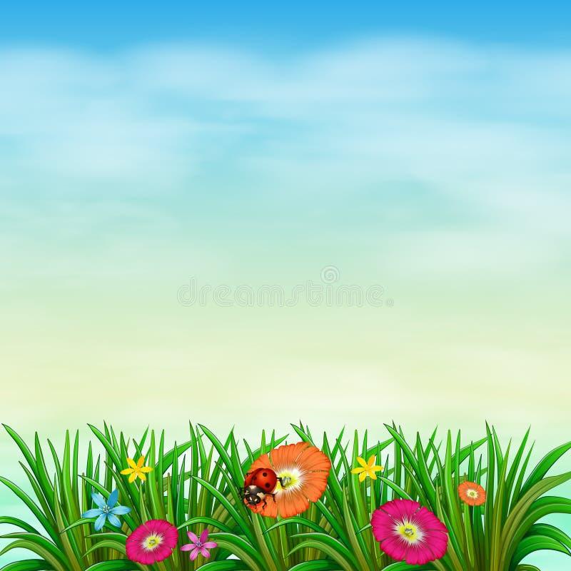 Um jardim com flores coloridas ilustração stock