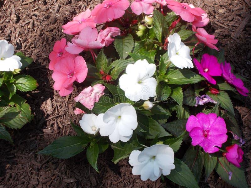 Um jardim cor-de-rosa na primavera fotografia de stock