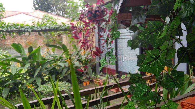 Um jardim de um restaurante em Tomohon, Sulawesi norte imagem de stock royalty free