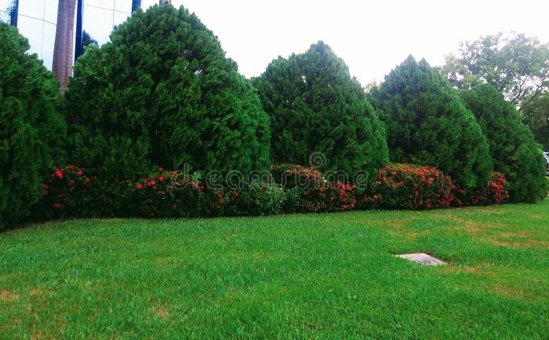 Um jardim Estados Unidos em Miami, Florida foto de stock