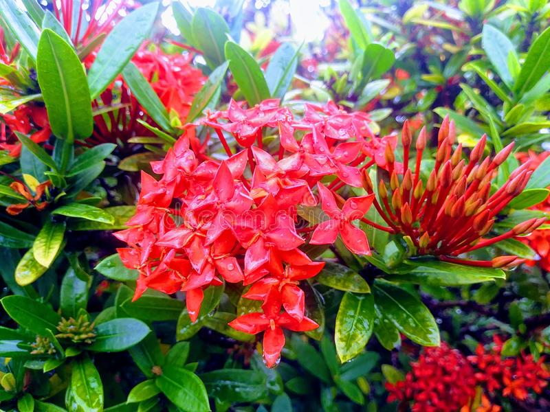Um jardim Estados Unidos em Miami, Florida fotos de stock