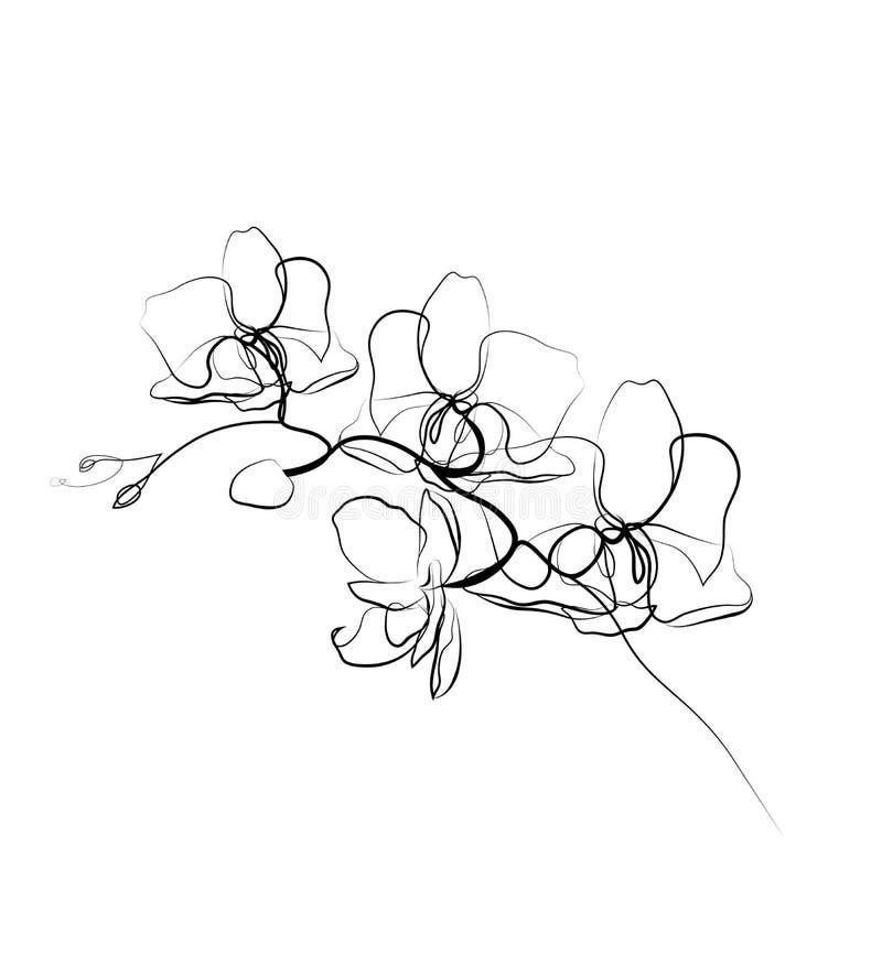 Um a lápis esboço da orquídea do desenho ?nica linha arte moderna, contorno est?tico Aperfeiçoe para a decoração tal como cartaze ilustração stock