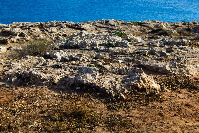 Um lagarto marrom pequeno em pedras amarelas quentes ao lado da grama chamuscada seca no deserto em Chipre contra o mar azul Roch fotos de stock royalty free
