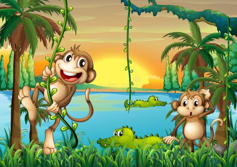 Um lago com jogo dos crocodilos e dos macacos ilustração stock
