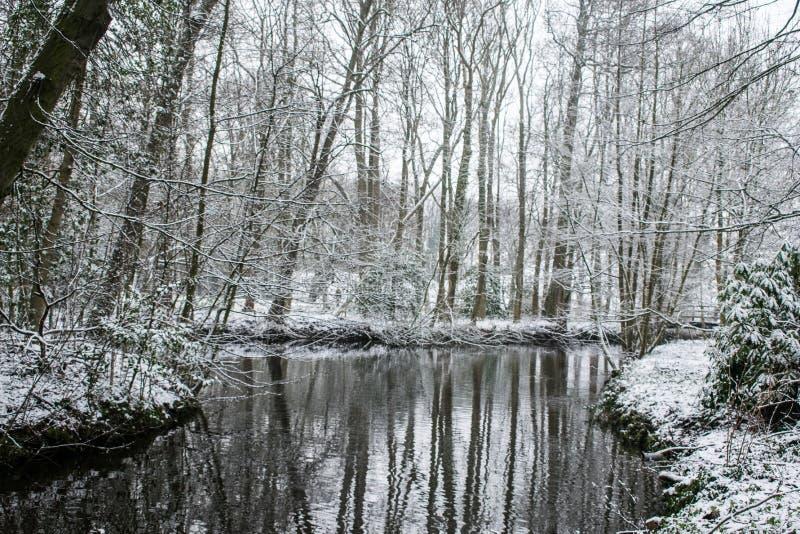 Um lago em uma floresta no inverno fotos de stock royalty free
