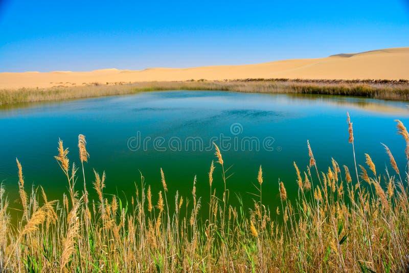 Um lago no meio do deserto fotografia de stock