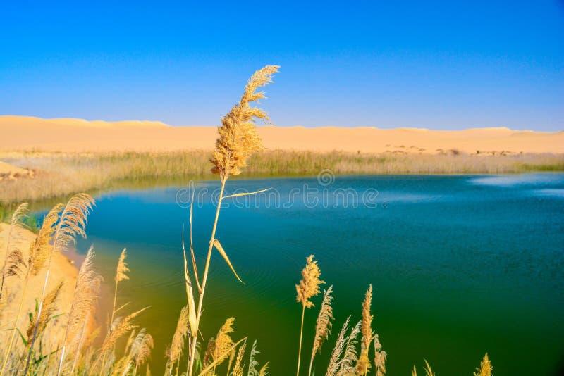 Um lago no meio do deserto fotografia de stock royalty free