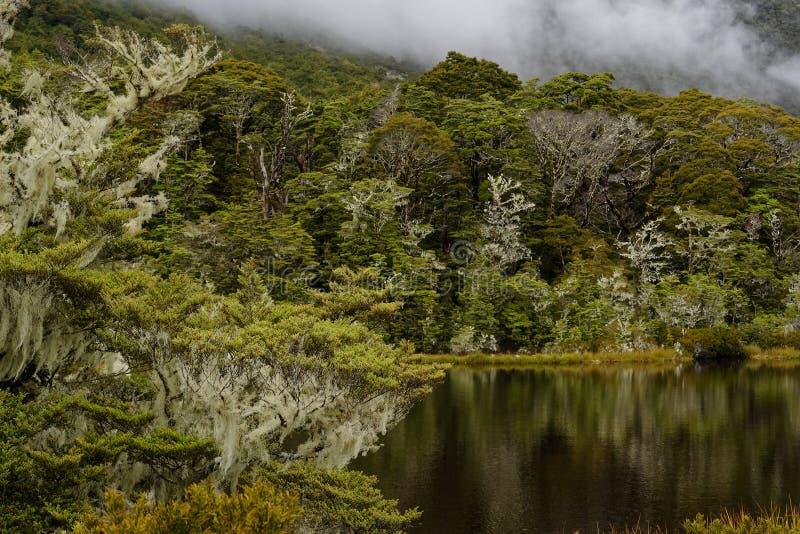 Um lago pequeno de tarn reflete a floresta circunvizinha e os montes nebulosos fotos de stock royalty free