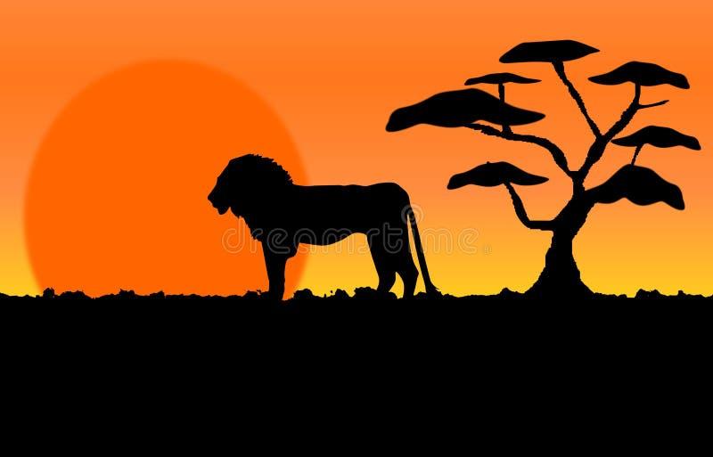 Um leão orgulhoso em um nascer do sol em África ilustração stock