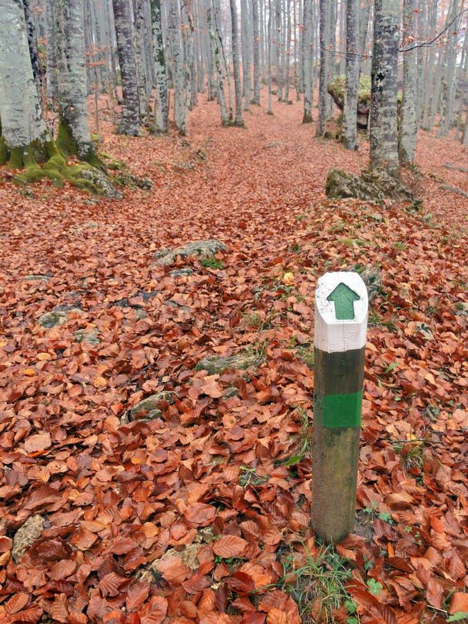 Um letreiro de madeira do sentido da maneira na floresta imagem de stock