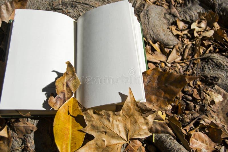 Um livro aberto no outono imagem de stock