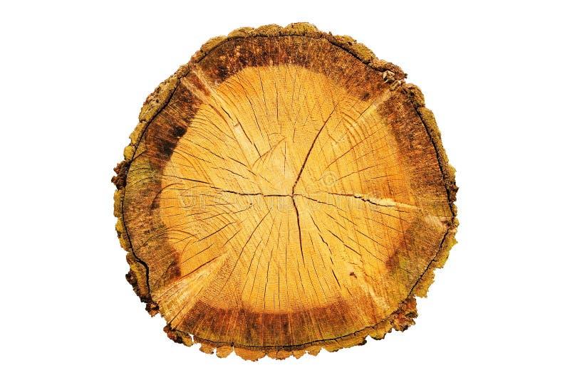 Um log visto fotografia de stock