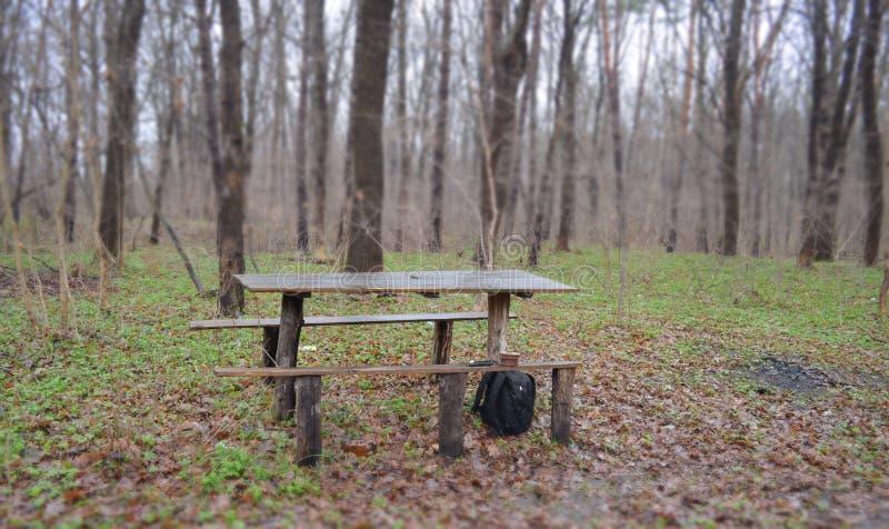 Um lugar a relaxar na floresta fotos de stock