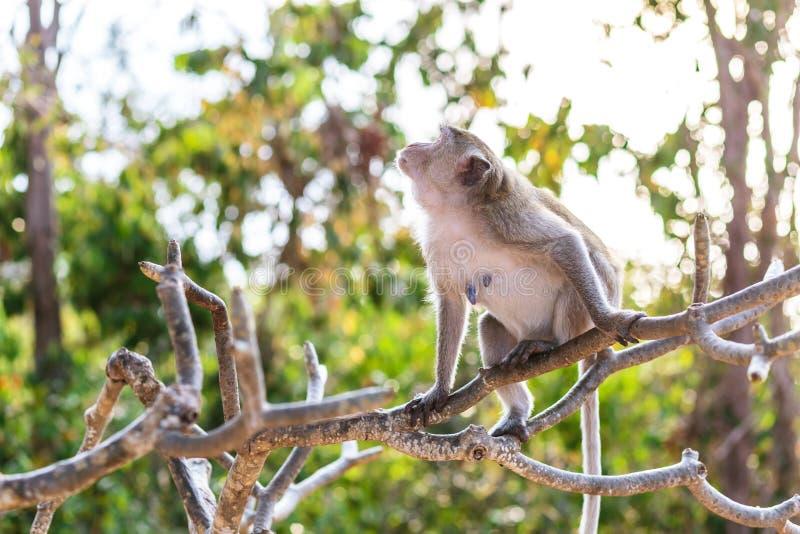 Um macaco no foco seletivo da árvore na natureza fotos de stock royalty free