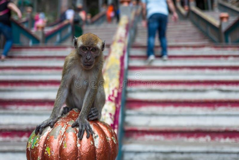 Um macaco perto do Batu cava em Kuala Lumpur imagens de stock royalty free