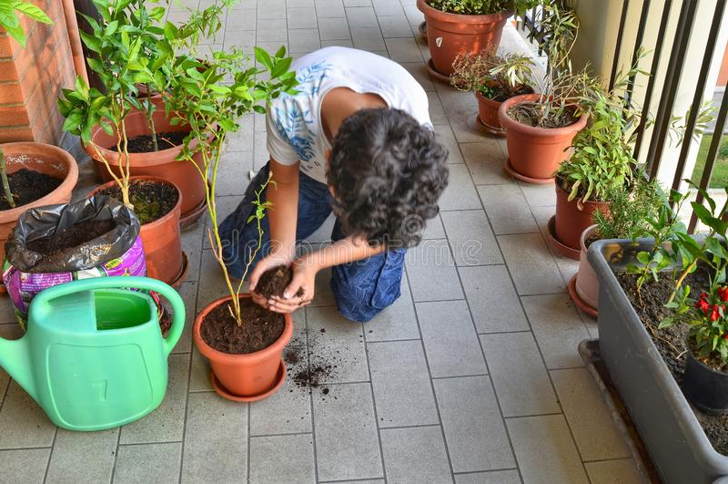 Um menino caucasiano novo está preparando ao potenciômetro uma planta do mirtilo fotografia de stock