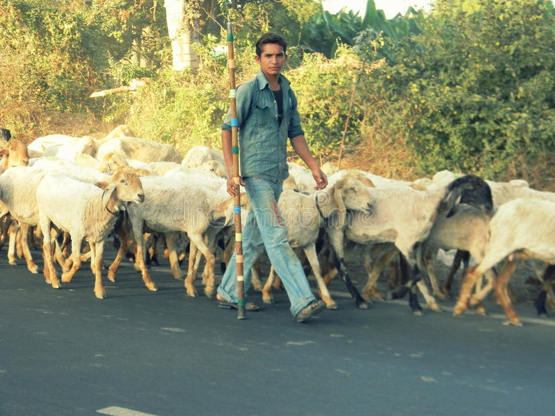 Um menino com um rebanho dos carneiros imagem de stock