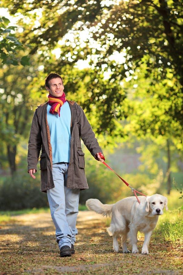 Um menino e seu cão que andam no parque no outono fotos de stock royalty free