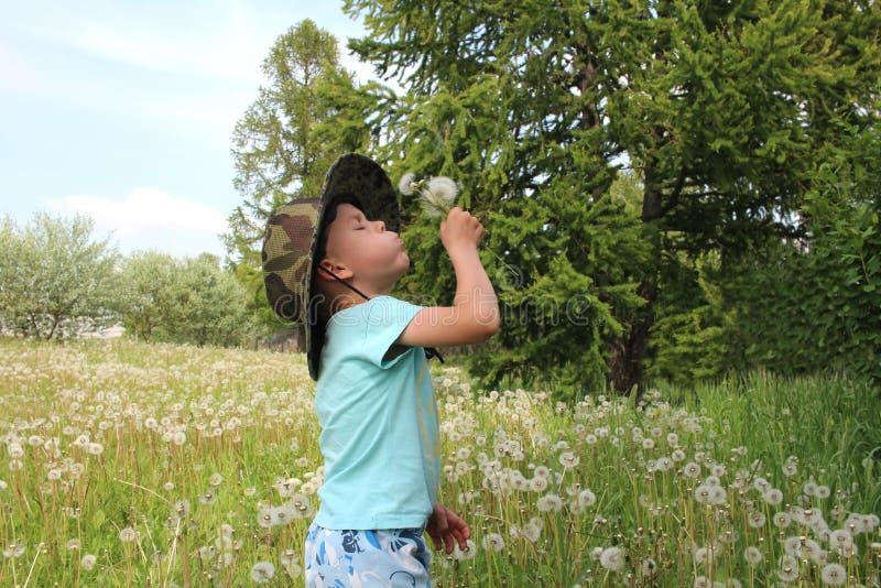 Um menino em um chapéu entre a grama que funde em dentes-de-leão fotografia de stock