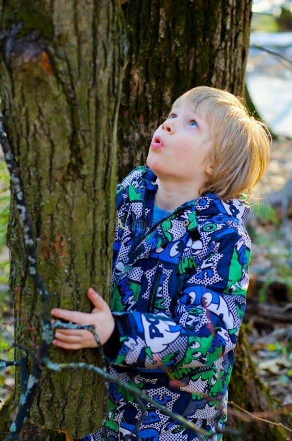 Um menino escala em uma árvore imagens de stock