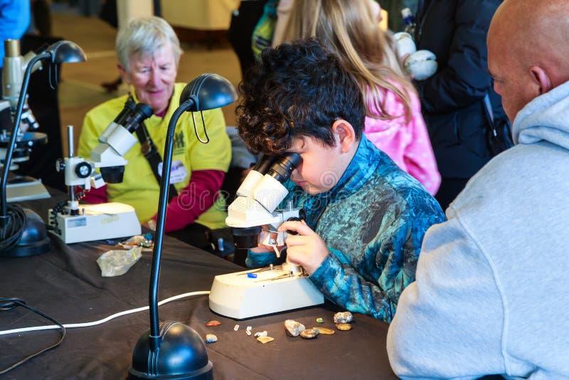 Um menino novo estuda fósseis e minerais sob um microscópio fotografia de stock royalty free