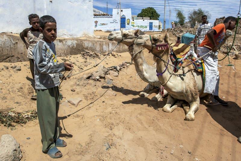 Um menino novo guarda um par de camelos em Egito imagem de stock
