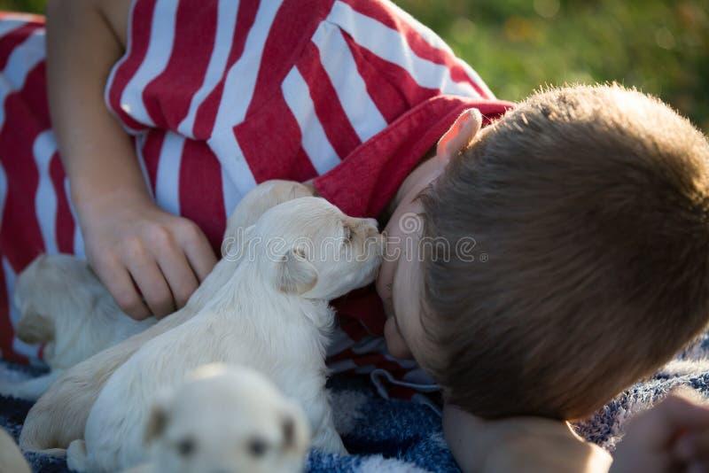 Um menino que obtém um beijo do cachorrinho fotografia de stock