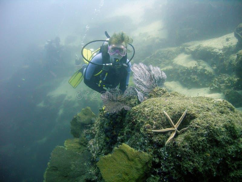 Um mergulhador no Oceano Pacífico fora de Cabo San Lucas, México foto de stock royalty free