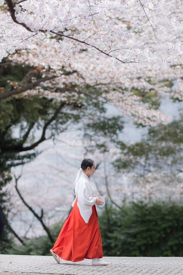 Um Miko está andando sob as flores de cerejeira em um santuário japonês do Shintoist imagem de stock